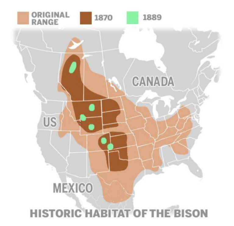 Map showing the historic habitat of the bison and how it shrank to very tiny areas in the 1800s.
