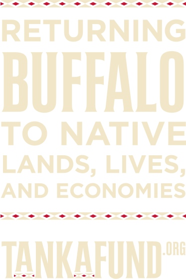 Returning Buffalo to Native Lands