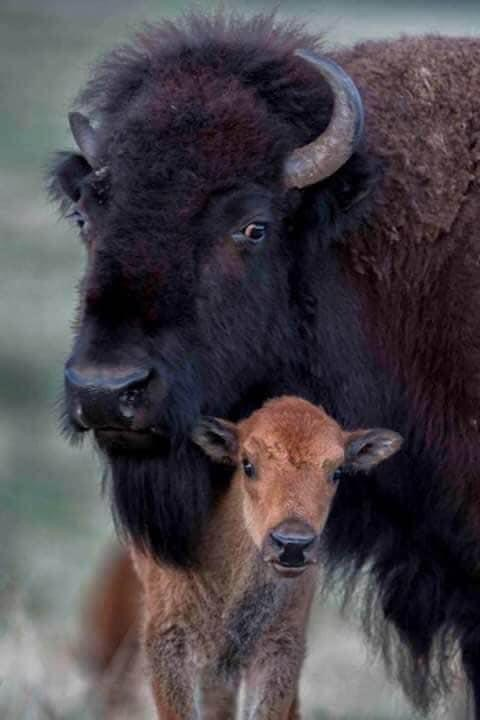 Buffalo Blogs: Returning Balance to the Earth