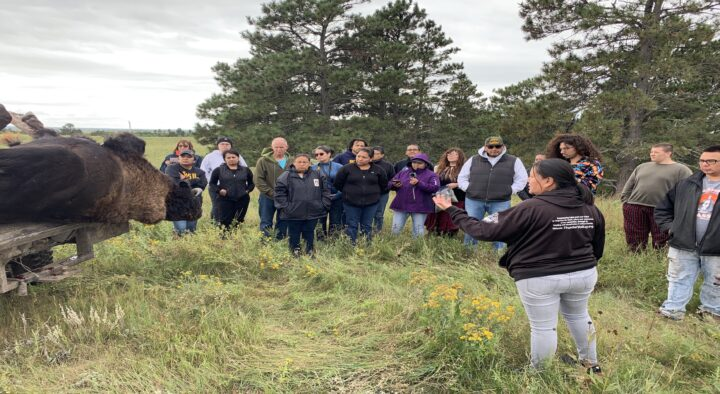 How Tanka Fund Supported Native Buffalo Producers in 2020