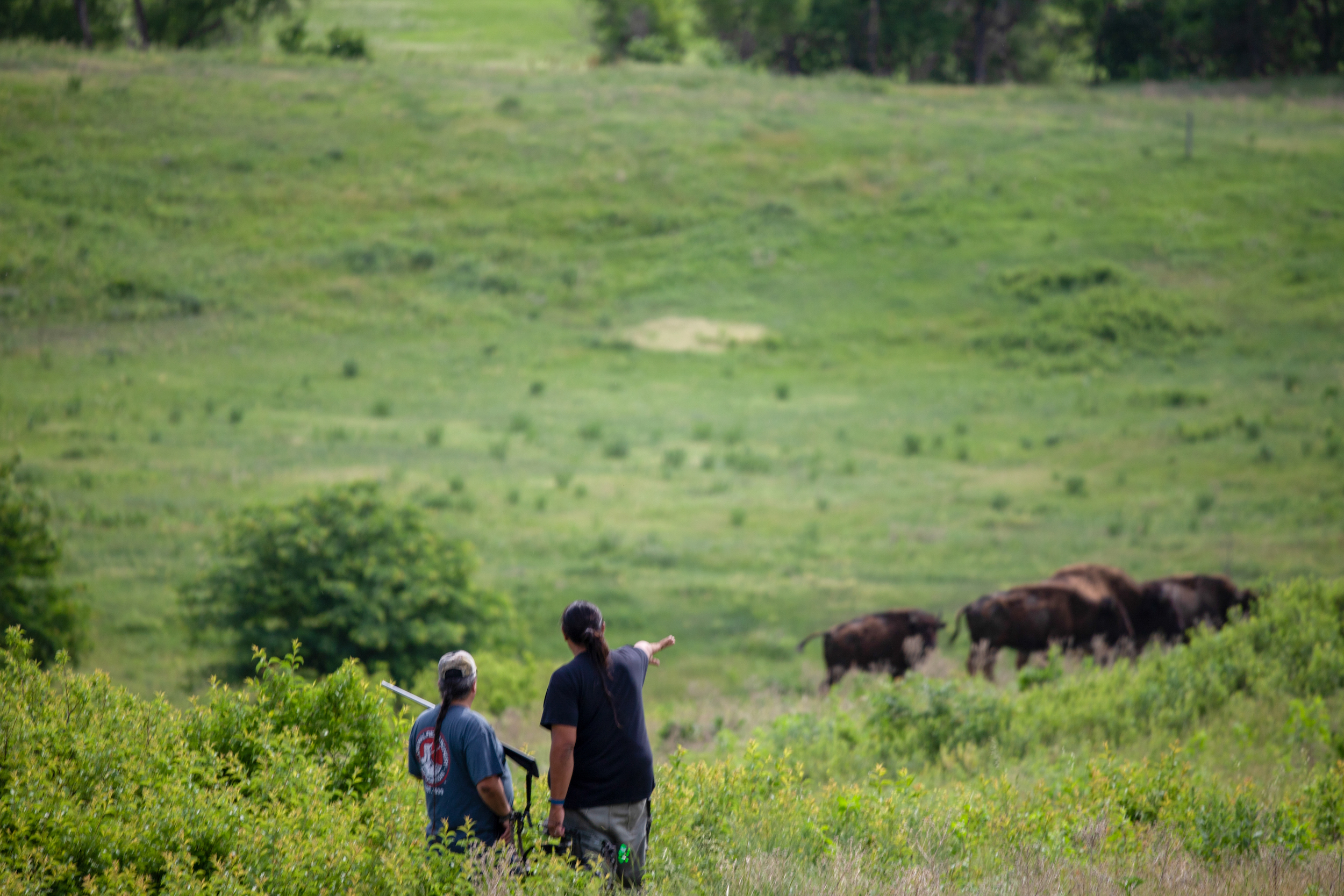 Two Native men stand on a plain and point to a herd of buffalo.