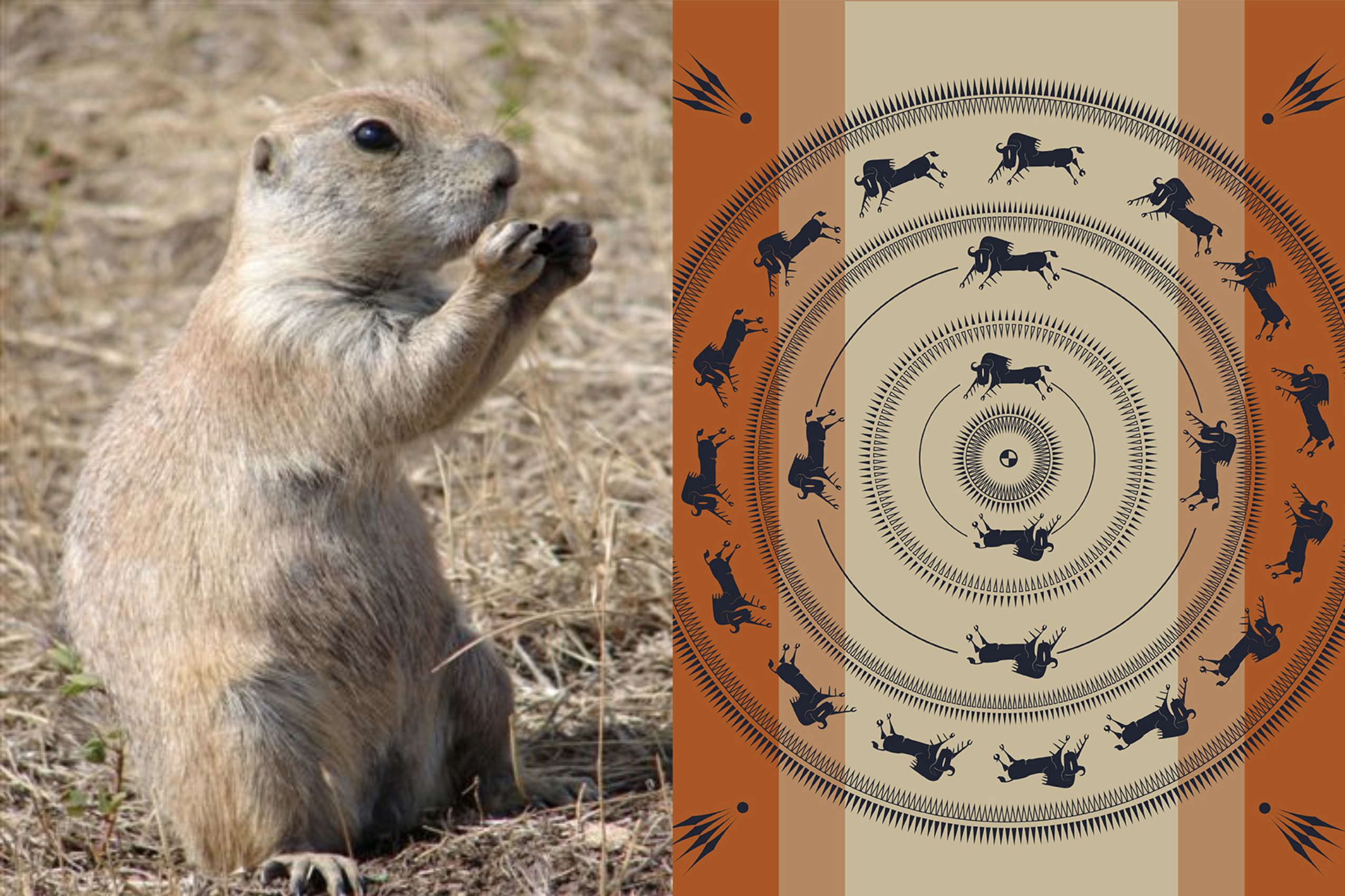 Buffalo Blogs: The Buffalo and the Prairie Dog