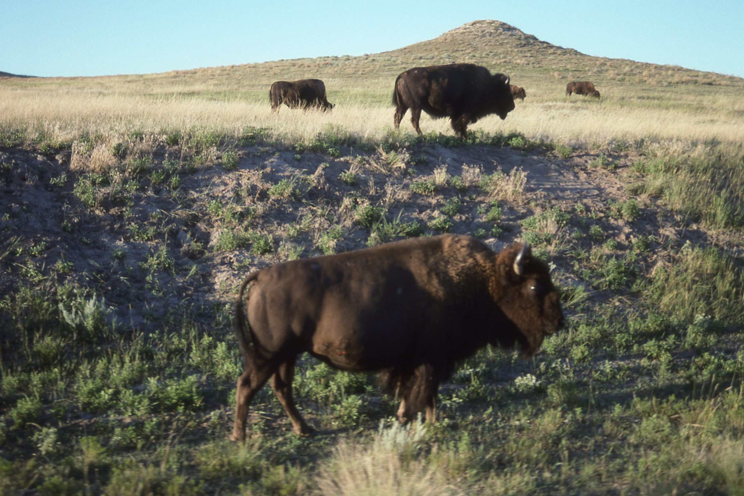 Keeping Your Herds Healthy — Guest Post by Bob Mahoney